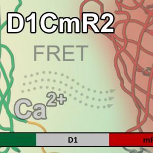 D1CMR2 Kopie