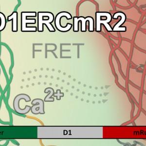 D1ERCmR2 Kopie