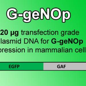 GgeNOp