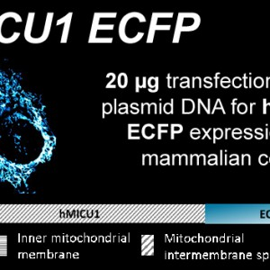 hmicu1-ecfp-kopie